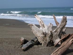 海の流木アート