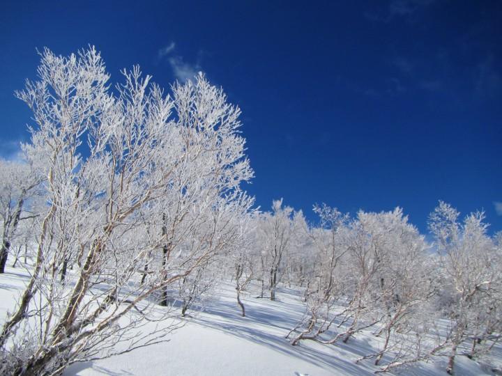 青空と霧氷の木々