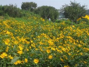 サイクリングロード脇の花畑