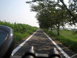 花見川サイクリングロード 直線