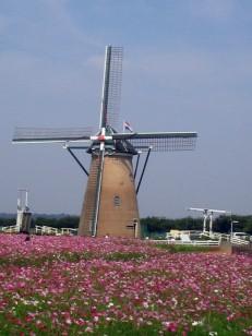 秋桜畑のオランダ風車