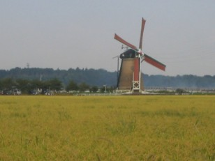豊作の稲穂と風車
