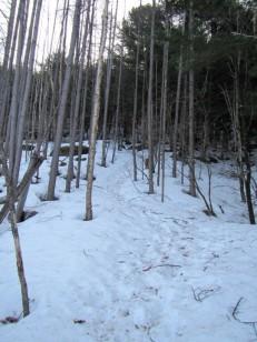 木々に雪は無い