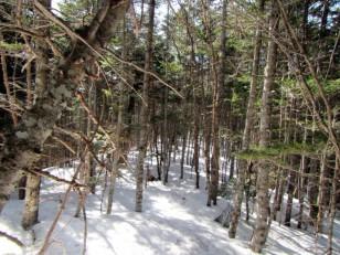 雪が多く残る森中