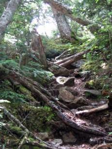 倒木が多い栗沢山の登り