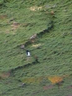 灌木帯に付けられた登山道