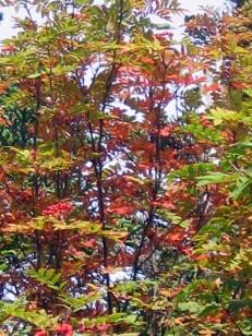 木々が紅葉