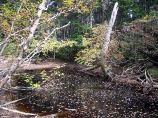 登山道脇の池