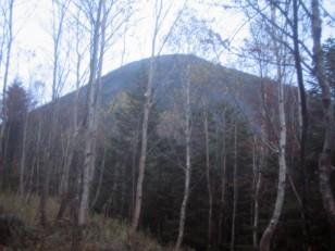 白樺林越しの蓼科山