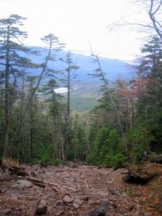 蓼科山荘からの登山道