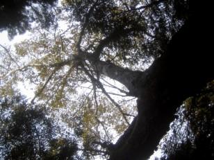 広葉樹の森