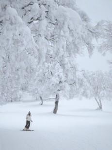 樹氷のツリーラン