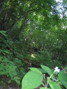 森深い十二曲りの登り