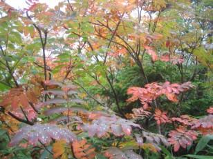 山の紅葉のはじまり
