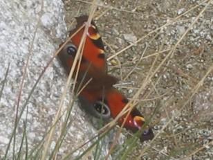 岩陰で羽を休めている