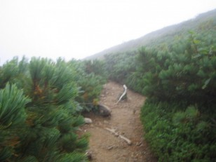 灌木帯を行く登山道