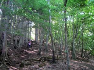 広葉樹の森を行く
