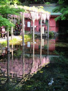 清らかな水面に写る藤棚