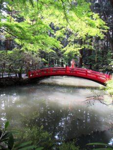 新緑の時待池