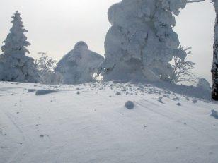 森中は雪深い
