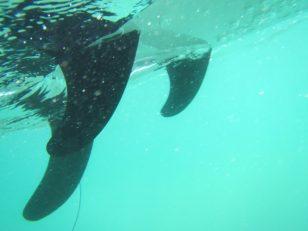 イルカに見える水中のスゲッグ